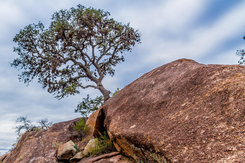 在山峭壁的幽静树。 免版税库存照片