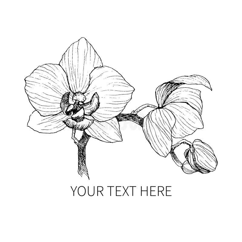 在被隔绝的白色背景的手拉的黑概述兰花 高度详细的传染媒介例证 美丽异乎寻常 向量例证
