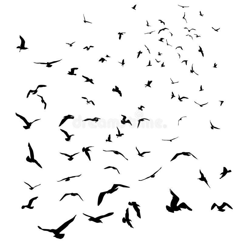 在被隔绝的白色背景的海鸥黑剪影 向量 库存例证