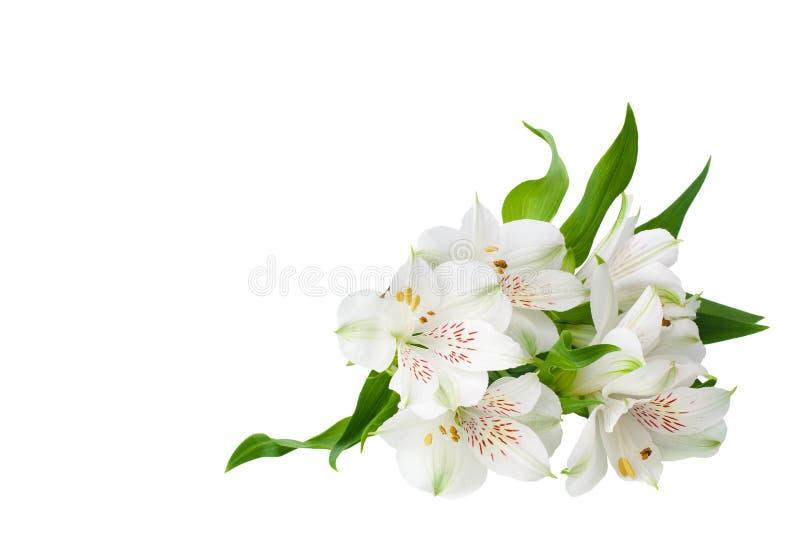 在被隔绝的白色背景的白色德国锥脚形酒杯花角落紧密,百合装饰边界的花束 库存照片