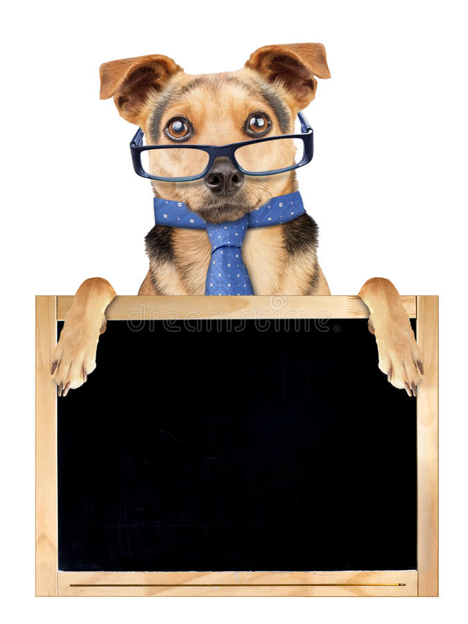 在被隔绝的空白的黑板后的滑稽的狗玻璃领带 免版税图库摄影