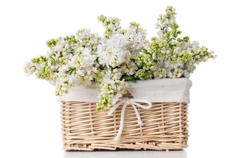 在被隔绝的篮子的白色淡紫色花 库存图片
