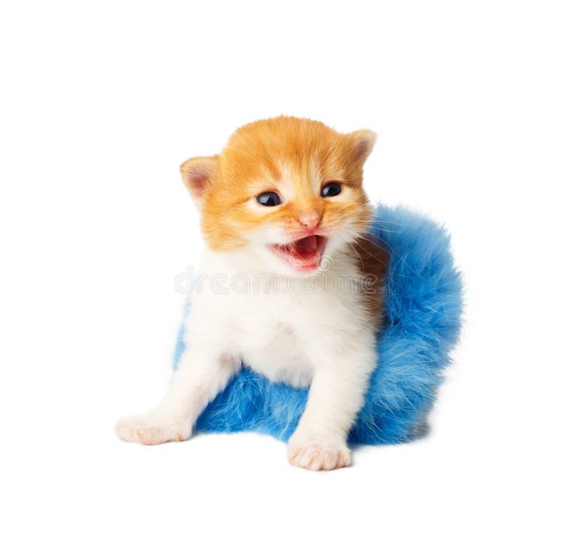在被隔绝的芭蕾舞短裙裙子的红色橙色滑稽的小猫 库存照片