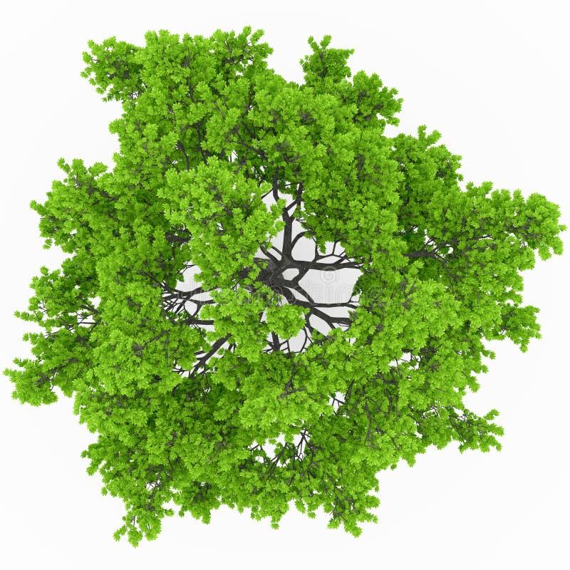 树顶视图 向量例证