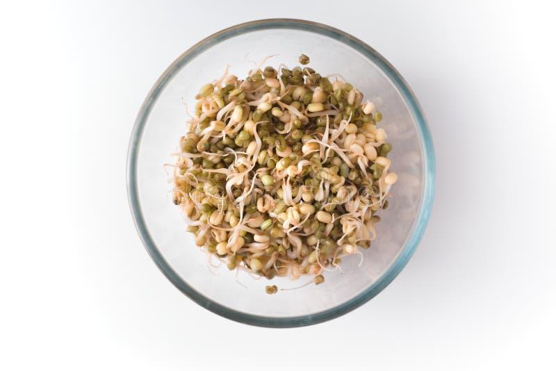 在被隔绝的玻璃碗拷贝空间的发芽的豆 免版税库存图片
