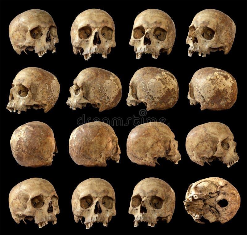 在被隔绝的黑背景的头骨集合 看法 图库摄影