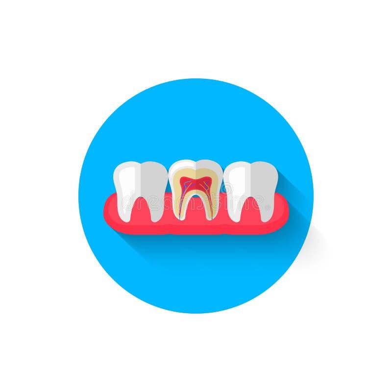 在裁减象的牙在一个平的设计样式传染媒介例证 在口腔医学题材的现代象  向量例证