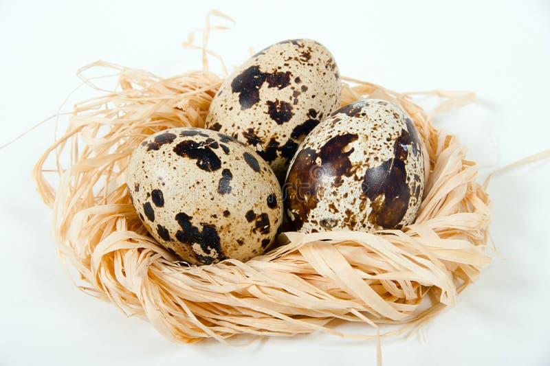 在装饰巢的鹌鹑蛋 免版税库存照片