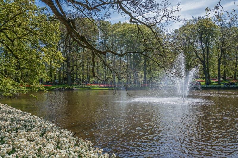 在装饰池塘的喷泉在公园 免版税图库摄影