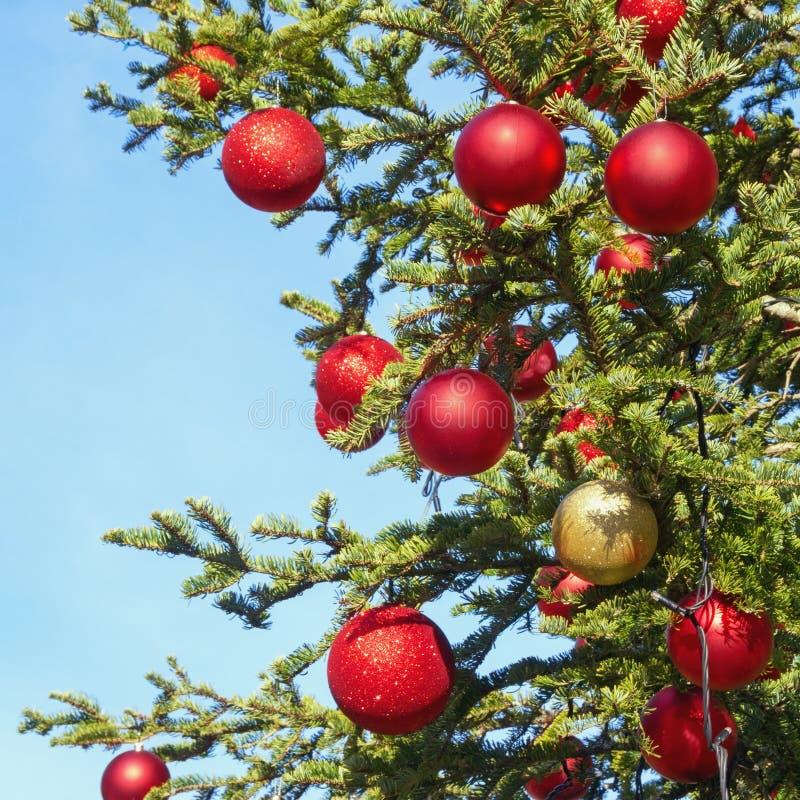 在装饰的圣诞树的明亮的圣诞节球反对天空蔚蓝 库存图片