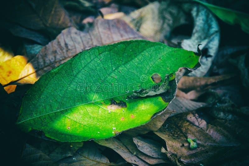 在褐色投入的绿色叶子抽象派设计背景烘干了叶子底层 免版税库存照片
