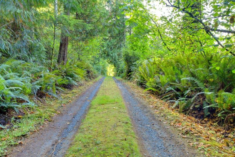 在西北美国森林里面的小私有乡下公路 免版税库存图片