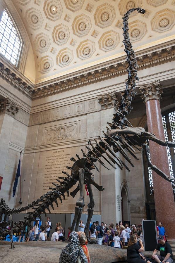 在西奥多・罗斯福的eople圆形建筑在美国自然历史博物馆,看重龙骨骼,在纽约 库存图片