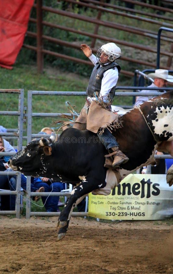 在西部竞争的公牛车手 库存图片