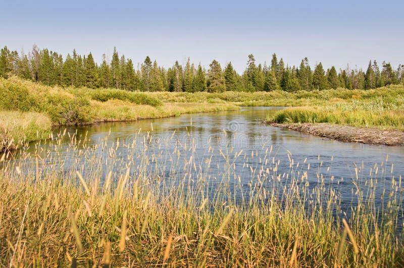 在西部黄石,美国附近的麦迪逊河 免版税图库摄影