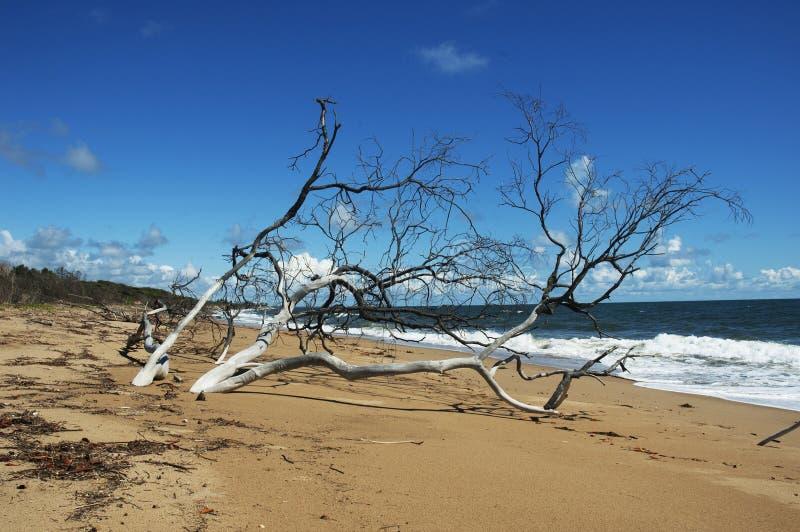 在规则海滩的树 库存照片