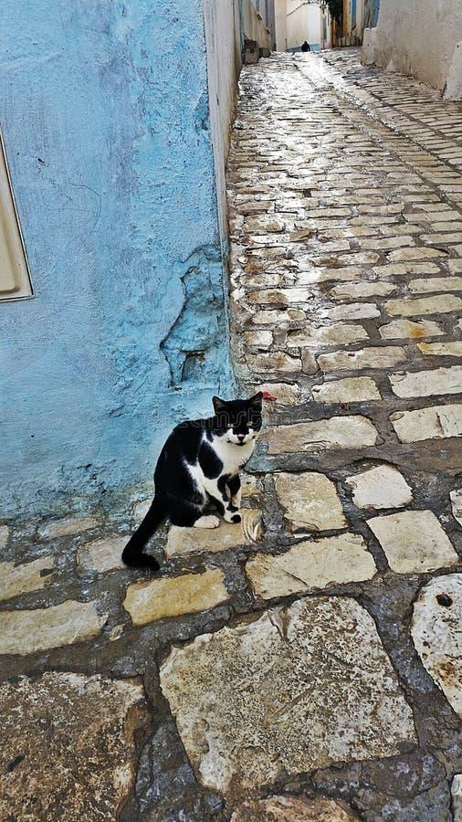 在角落的猫 免版税库存照片