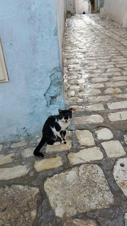 在角落的猫 库存图片