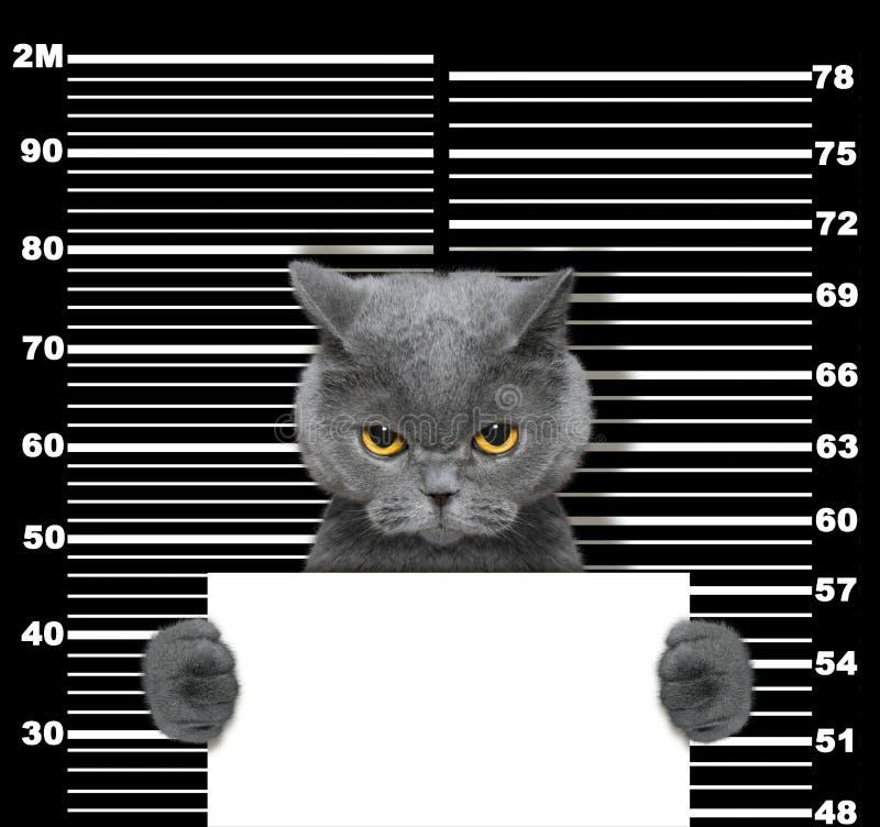在警察局的坏猫 在黑色的照片 图库摄影