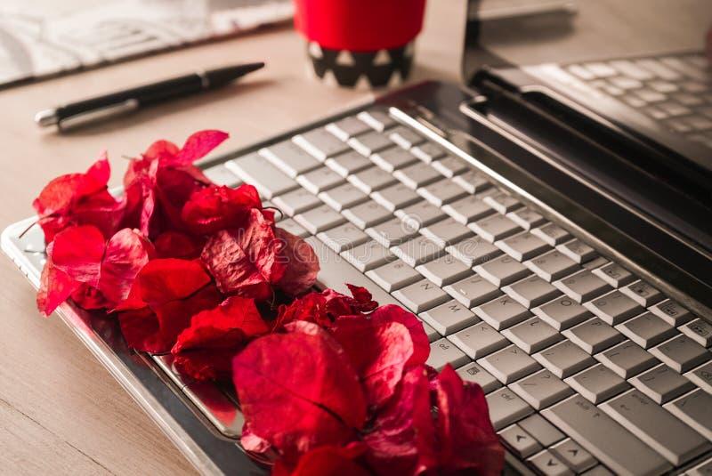 在计算机上的花瓣 图库摄影