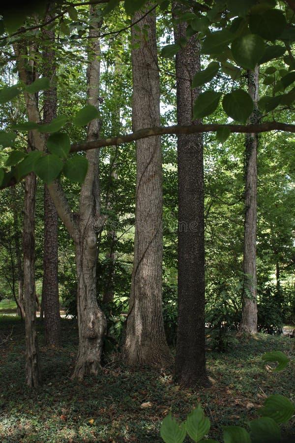 在议院附近的树 库存照片