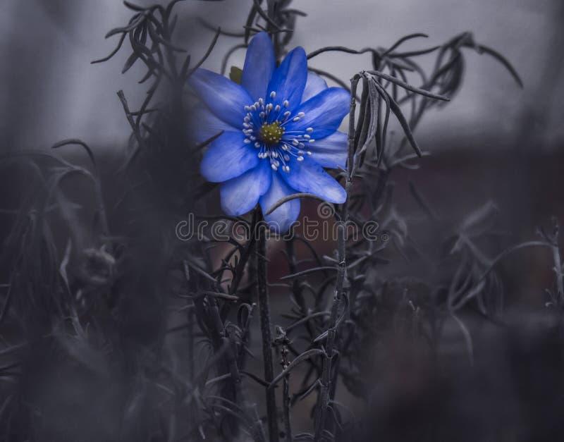 在许多的美丽的花死的植物 库存图片