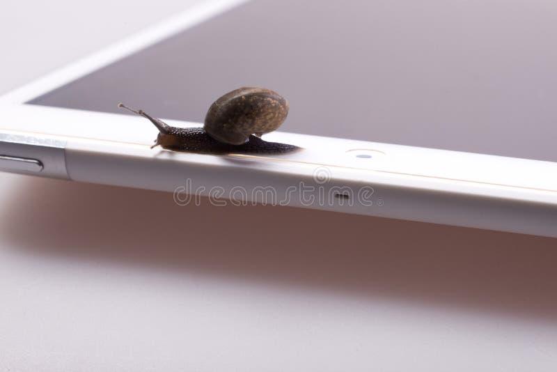 在设备的蜗牛 库存照片