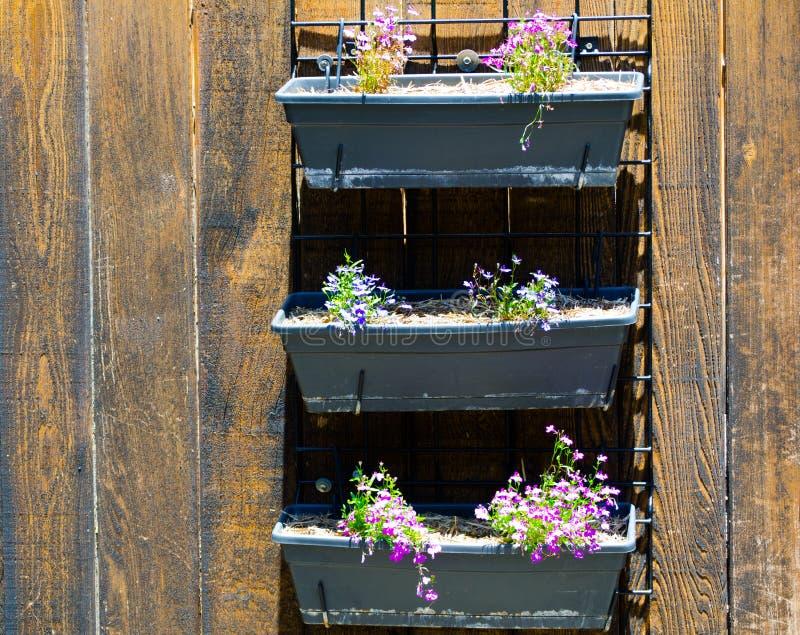 在设计的美丽的桃红色紫色花摆正垂悬在排柱上的罐 库存图片