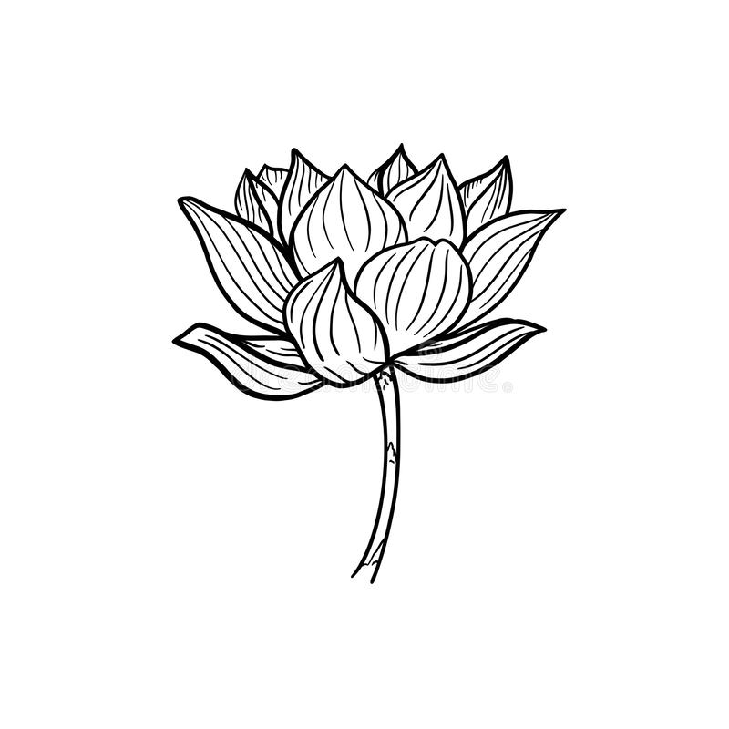 ?? 在词根的一朵美丽的被打开的莲花 在白色背景得出的黑白例证 向量例证