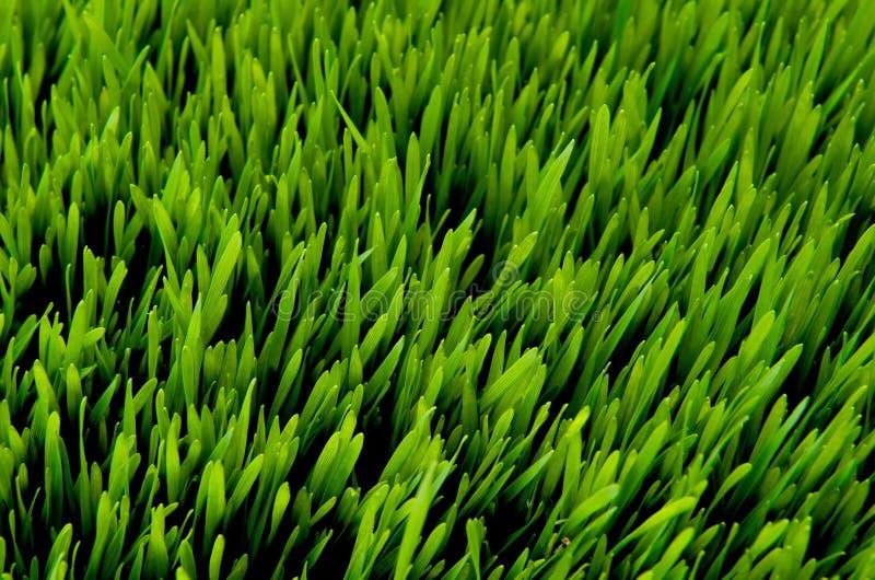 在详细资料草绿色之上 库存图片