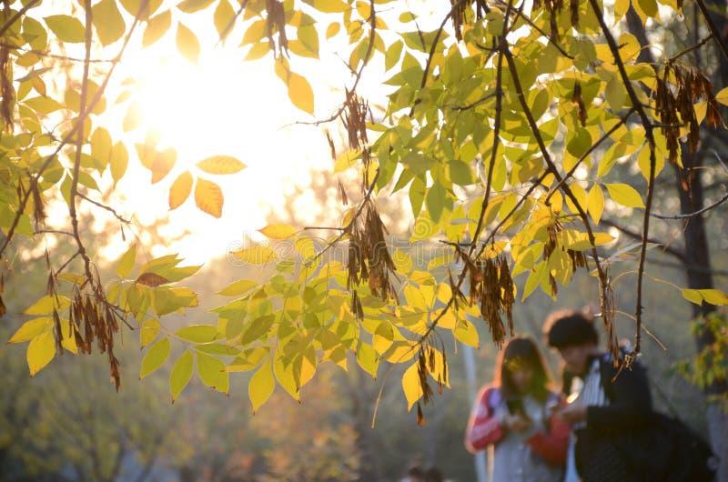 在读书的年轻夫妇在森林里 免版税库存照片