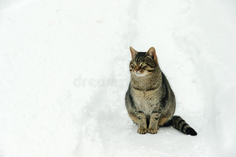 在调查距离的雪道的一只猫 图库摄影