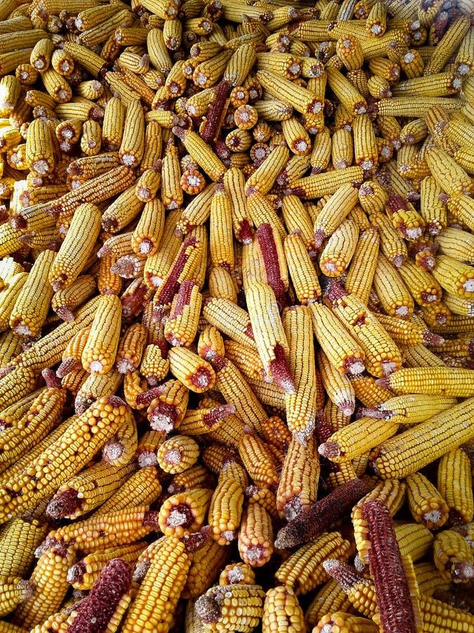 在谷仓玉米收获的堆 库存照片