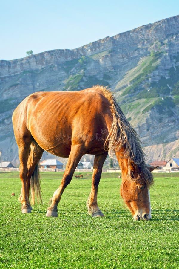 在谷的一匹马 免版税库存图片