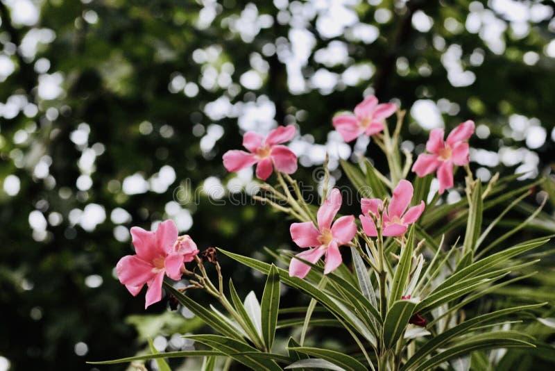 在谷的桃红色花 免版税库存照片