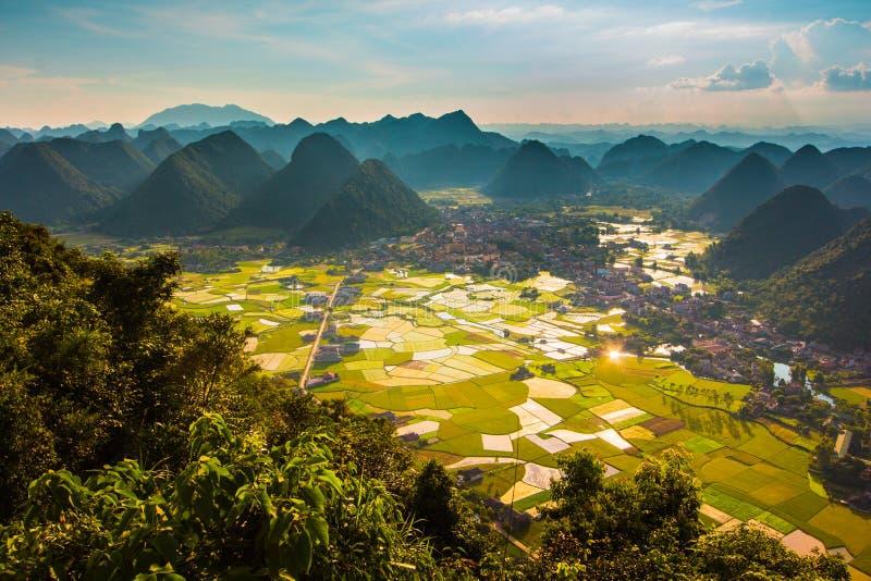 在谷的米领域在Bac儿子,越南 库存图片