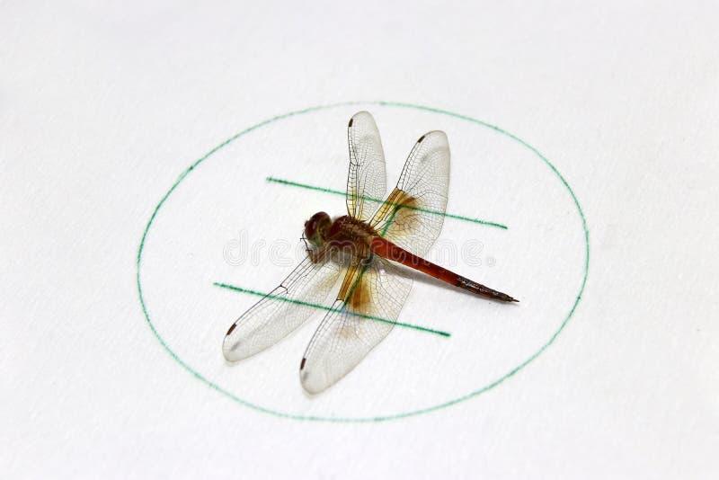 在象征性的蜻蜓在白色背景的直升机停车处 库存图片