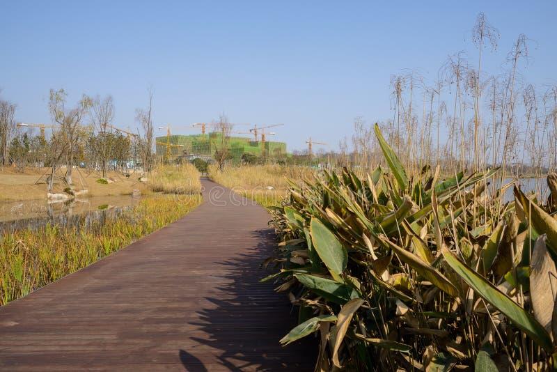 在象草的湖边的Planked道路在晴朗的冬天下午 免版税库存图片