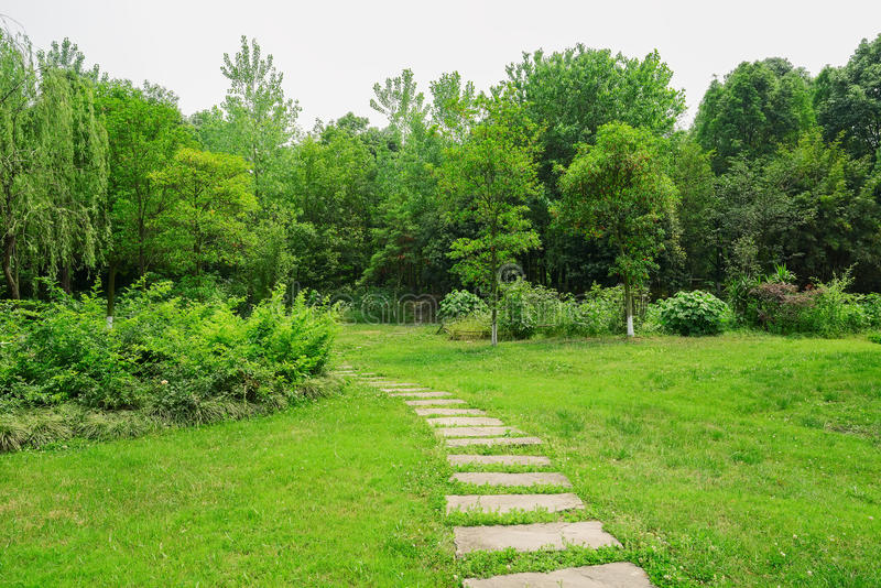 在象草的草坪的石板道路舒展入晴朗的summ的森林 免版税库存照片