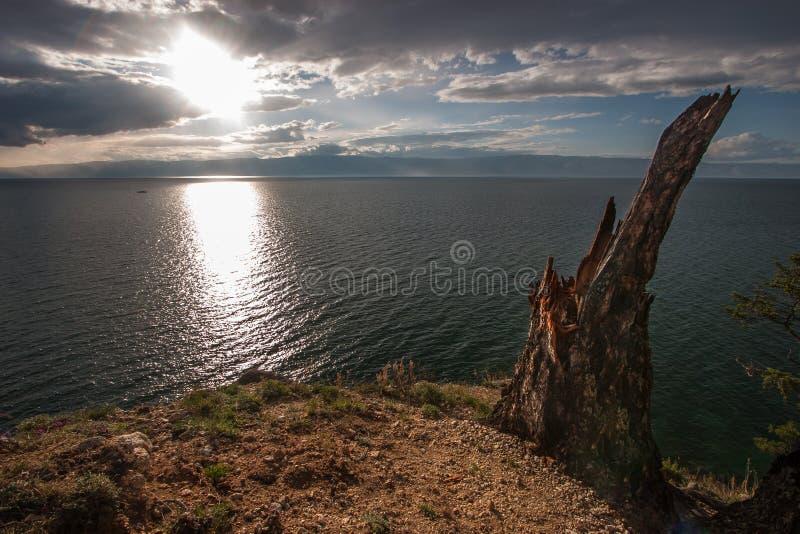在贝加尔湖岸的老偏僻的残破的树桩  在天空,在山的天际的云彩 免版税库存照片