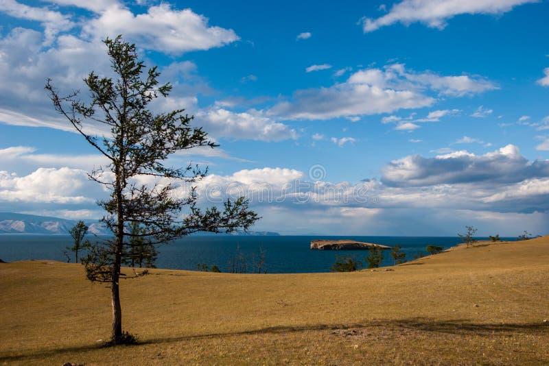 在贝加尔湖的一棵树干草原岸的 在湖是海岛 在天空的云彩 免版税图库摄影