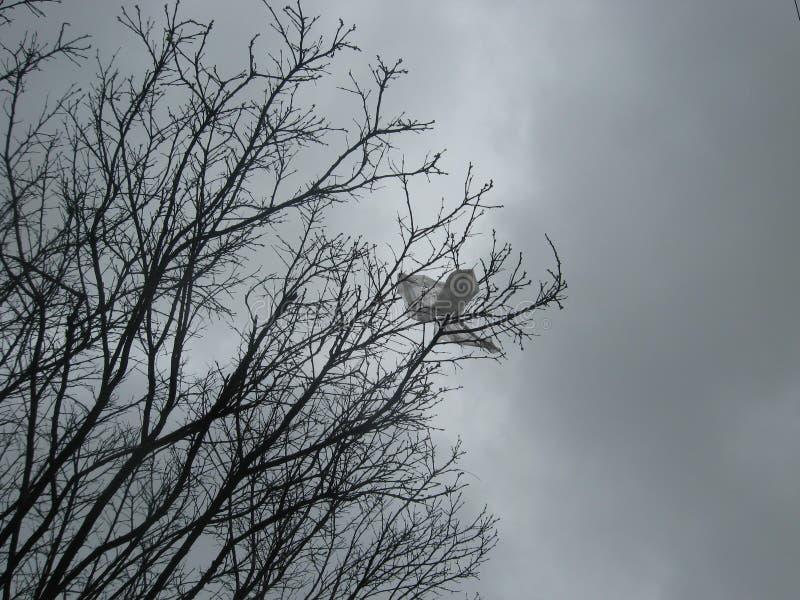 在贫瘠树枝的塑料土在多雨早期的春天天气有深灰哀痛背景 库存照片