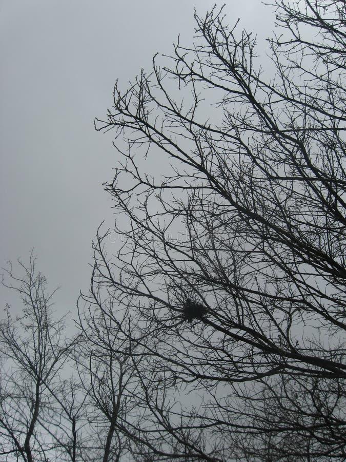 在贫瘠树枝的被放弃的鸟巢在多雨早期的春天天气有深灰哀痛背景 库存照片