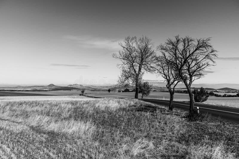 在贫瘠风景的柏油路与树在晴朗的秋天天 免版税图库摄影
