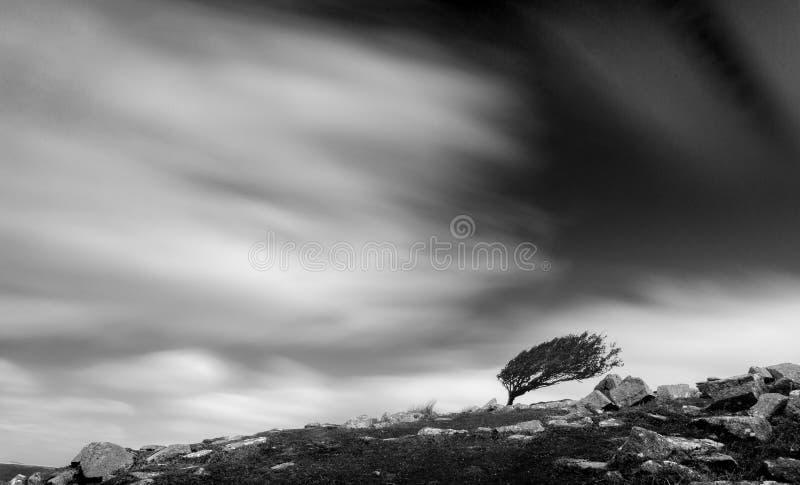 在贫瘠风景,博德明的树停泊,康沃尔郡 库存图片