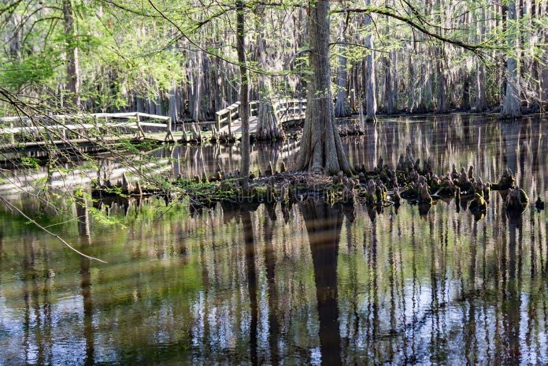 在赛普里斯沼泽的人行桥在南卡罗来纳,美国 免版税库存照片