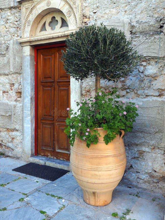 在赤土陶器罐的小橄榄树 免版税库存图片