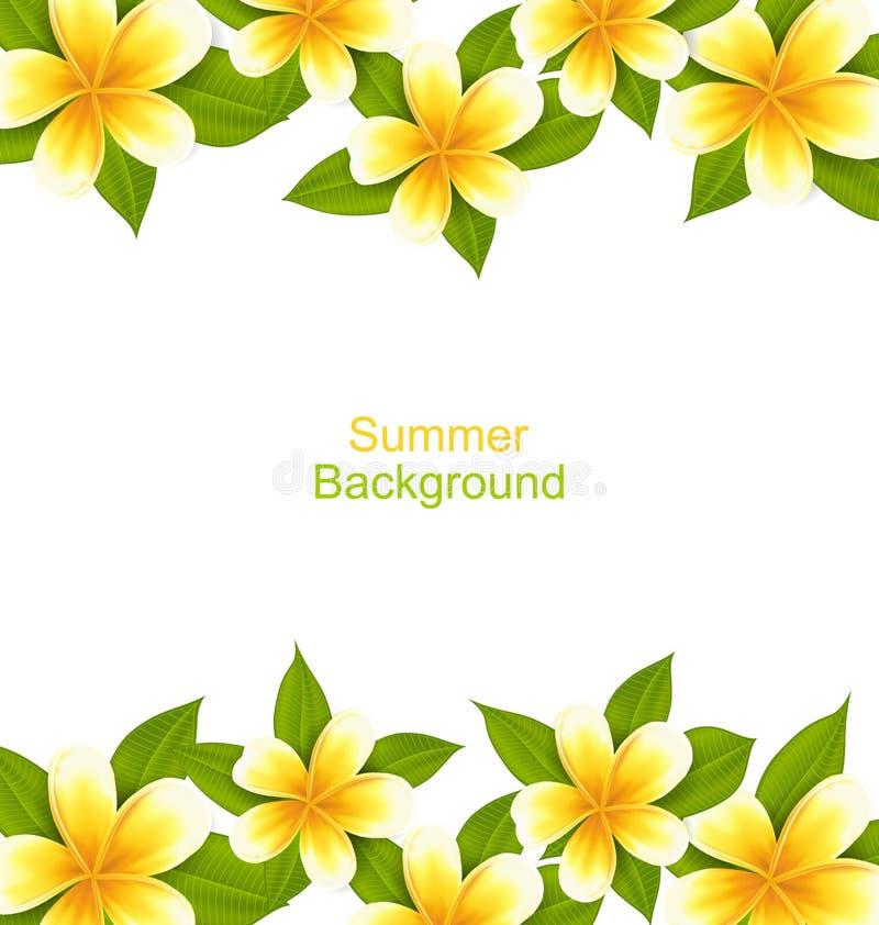 在赤素馨花做的美好的框架,与异乎寻常的花的oOrnament 皇族释放例证