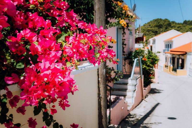 在走道的洋红色花在小地中海村庄 在街道上的传统希腊房子有大的 库存照片