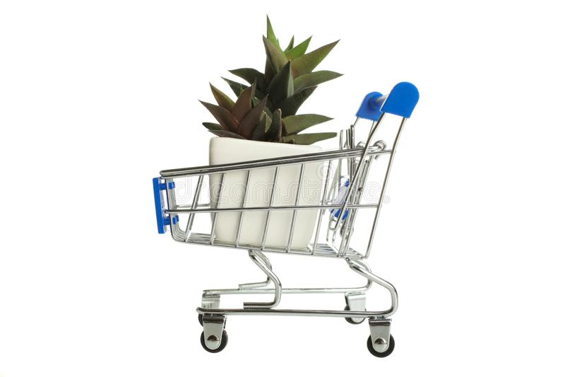 在超级市场台车的多汁植物 库存图片